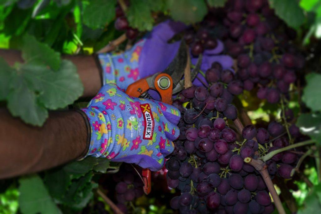 دستکش مناسب فعالیت های کشاورزی | 1